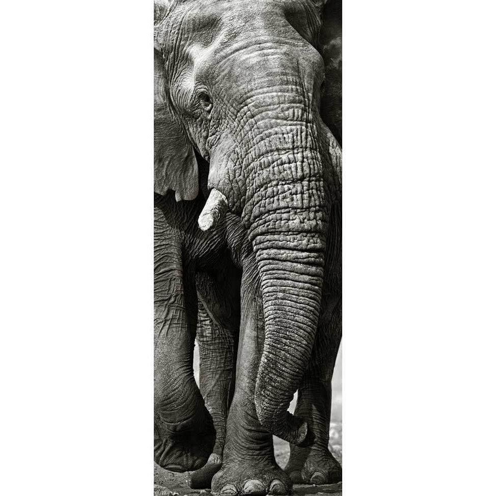 poster elephant noir et blanc